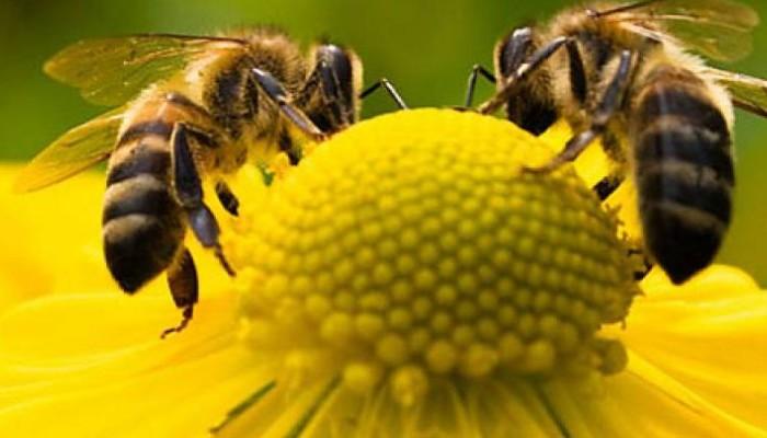 Οι μέλισσες ξέρουν μαθηματικά και κάνουν πράξεις
