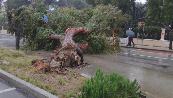 Η στιγμή που πέφτει δέντρο σε κεντρικό δρόμο του Ρεθύμνου - Ποιοι δρόμοι είναι κλειστοί