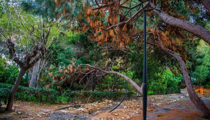 Ο δήμος Ηρακλείου για την κοπή δέντρων στο Πάρκο Γεωργιάδη