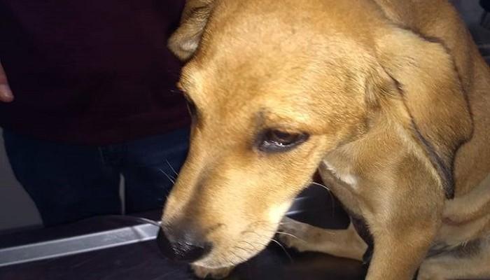 Χανιά: Κλότσησαν σκύλο τόσο δυνατά που μετακινήθηκε το στομάχι του (φωτο)