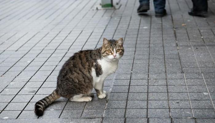Γυναίκα εξοντώνει γάτες και δίνει συνταγές για φόλες μέσω facebook (φωτο)