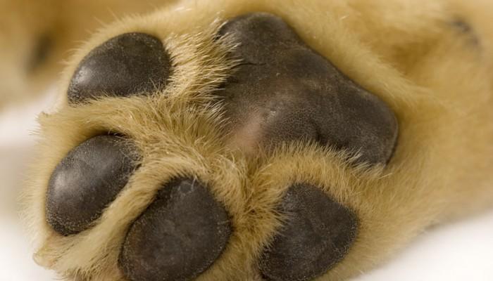 Εξαφανίσθηκε σκυλάκι στα Χανιά (φωτο)