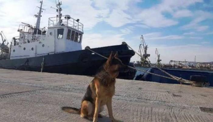 Οι αστυνομικοί σκύλοι που