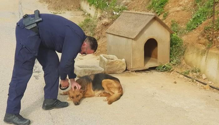Στο αυτόφωρο ιδιοκτήτης σκυλιών στην Κισσαμο που τα είχε αλυσοδεμένα