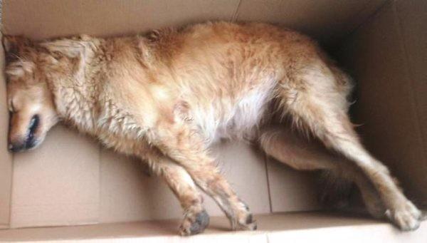 Προσοχή ρίχνουν φόλες σε σκυλιά στα Νεροκούρου (φωτο)