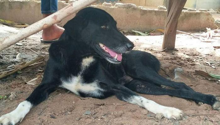 Ανάπηρος σκύλος έσωσε βρέφος που έθαψαν ζωντανό σε χωράφι