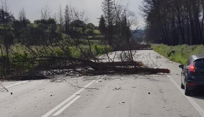 Δέντρα έπεσαν λόγω αέρα και έκλεισαν τον δρόμο στις Βρύσες-Έπεσε στύλος παρασύρθηκε ελενίτ