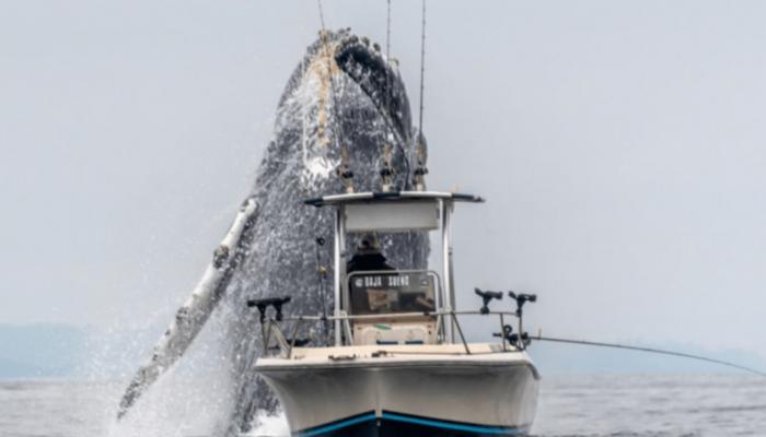 Ψαράς με τη βάρκα του… στη σκιά μιας τεράστιας φάλαινας!