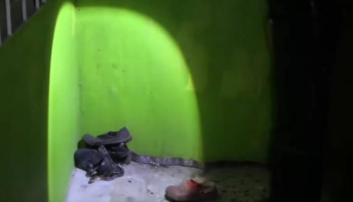 Πήγε να βάλει τα παπούτσια του και τον περίμενε μια έκπληξη ανατριχιαστικών διαστάσεων