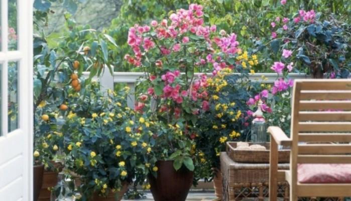 Διαγωνισμός για τον καλύτερο κήπο και το καλύτερο μπαλκόνι
