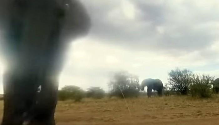 Eλέφαντας πήρε χαμπάρι μια κρυφή κάμερα και εκνευρίστηκε πολύ