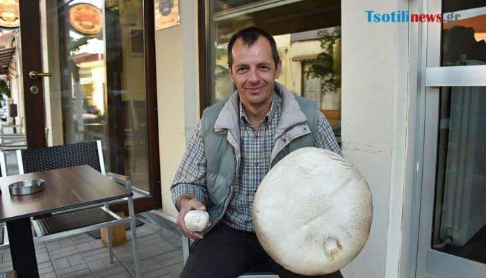 Δείτε το μανιτάρι - γίγας που βρέθηκε στον Αυγερινό Κοζάνης