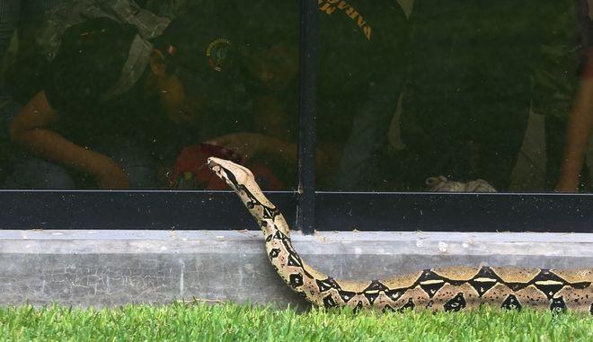 Βόας σκόρπισε τον τρόμο σε σχολική εκδρομή - Μάχη πυροσβέστη με το φίδι
