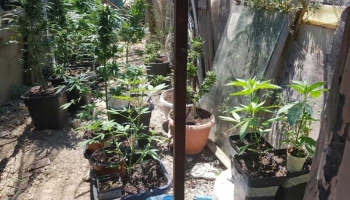Σε ειδικά διαμορφωμένο χώρο καλλιεργούσαν δενδρύλλια στο Ηράκλειο (φωτο)