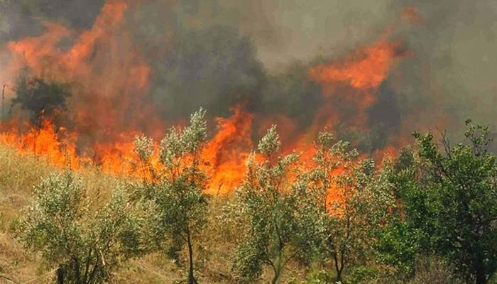 Πυρκαγιά κοντά στην λίμνη της Αγυιάς στα Χανιά