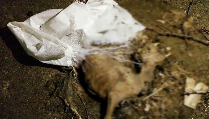 Ηράκλειο: Σοκαριστικές εικόνες νεκρών προβάτων στην Χερσόνησο