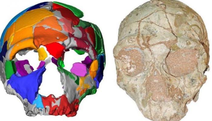 Μάνη: Κρανίο 210.000 ετών αποτελεί το αρχαιότερο δείγμα σύγχρονου ανθρώπου στην Ευρασία