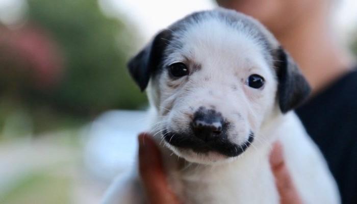 Ένας σκύλος με μουστάκι!