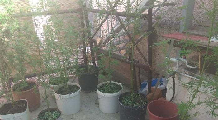 Θεσσαλονίκη: Μετέτρεψε διαμέρισμα σε εργαστήρι υδροπονικής καλλιέργειας κάνναβης