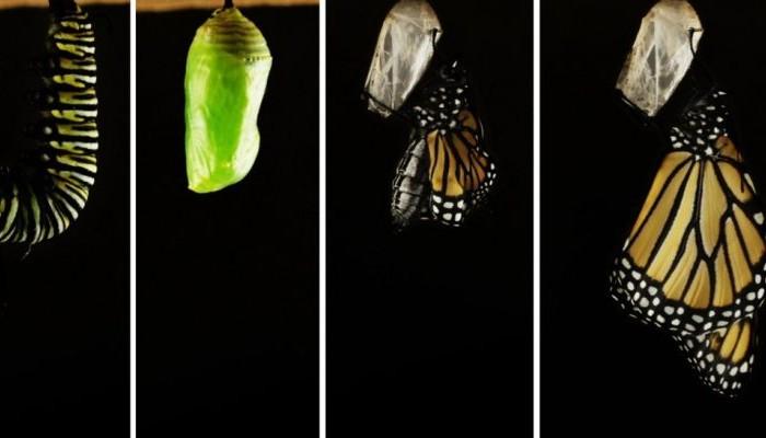Από κάμπια σε πεταλούδα: Η διαδικασία της μεταμόρφωσης