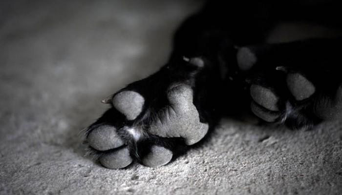 Σκυλί βρέθηκε πνιγμένο με δεμένα τα πόδια σε ακτή του Βόλου