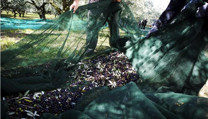 Μοναδικές προσφορές σε ελαιόδιχτα μόνιμης στρώσης & μαλακά δίχτυα ελαιοσυλλογής