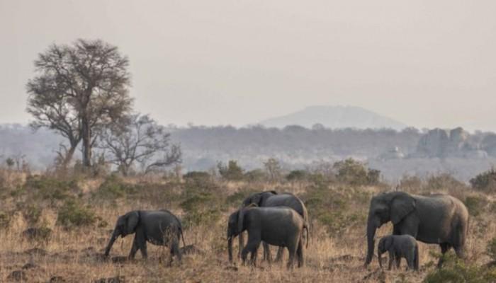 Περισσότεροι από 50 ελέφαντες πέθαναν από την ξηρασία στη Ζιμπάμπουε