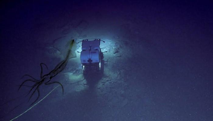 Περίεργο καλαμάρι παρακολουθεί υποβρύχιο σκάφος ενώ αυτό εξερευνά τον βυθό