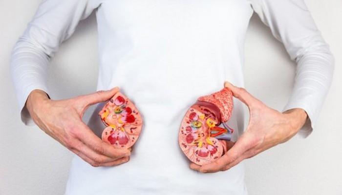 Έως 7 χρόνια η αναμονή στη λίστα για μεταμόσχευση νεφρού