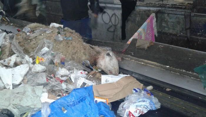 Εικόνες - σοκ στο εργοστάσιο απορριμμάτων στο Ηράκλειο - Προσοχή