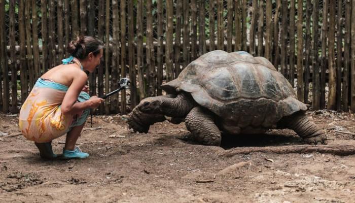 Ακόμα και οι γιγάντιες χελώνες εκπαιδεύονται!