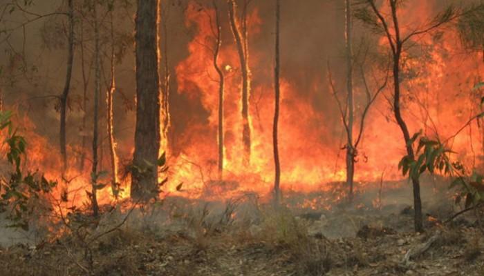 Οι πυρκαγιές κατέστρεψαν το ένα πέμπτο των δασών, σύμφωνα με μελέτες