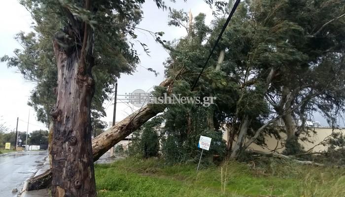 Ξεπατώθηκε ολόκληρο δέντρο στη λεωφόρο Σούδας, ξηλώνοντας το πεζοδρόμιο (φωτο-βίντεο)