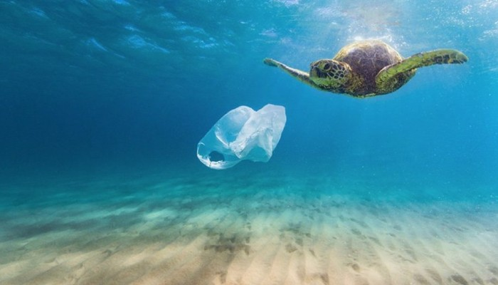 Tο 70% των θαλάσσιων χελωνών του «ΑΡΧΕΛΩΝ» είχε καταπιεί πλαστικά