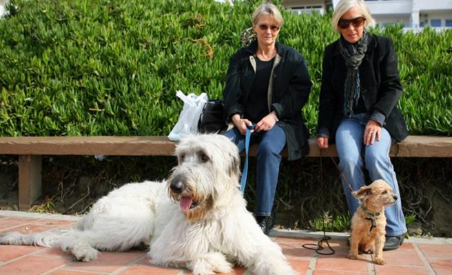 Κατοικίδια σκυλιά για… ψυχολόγο