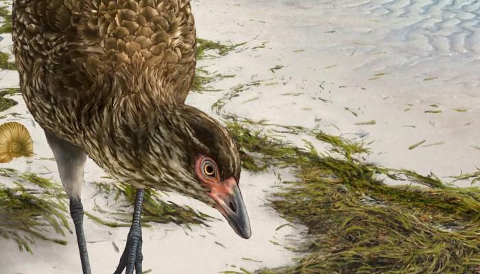 Ανακαλύφθηκε το αρχαιότερο απολίθωμα σύγχρονου πουλιού που έζησε πριν 67 εκατ. χρόνια