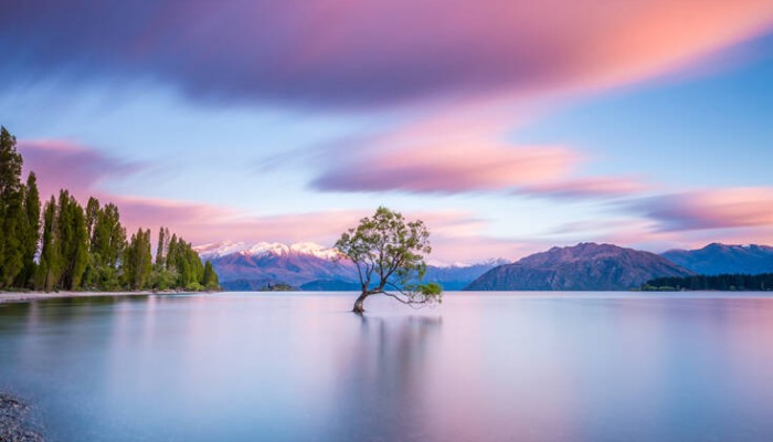 Βανδαλίστηκε ένα από τα πιο αναγνωρίσιμα δέντρα του πλανήτη