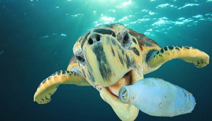 Θαλάσσιες Χελώνες – Εξελικτική «παγίδα» τις κάνει να τρώνε πλαστικό