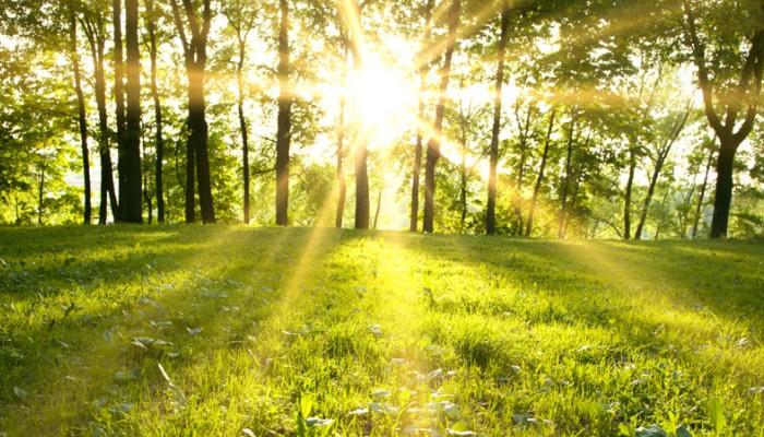 Τα αποδοτικότερα φυτά και δένδρα στη μάχη κατά της ατμοσφαιρικής ρύπανσης