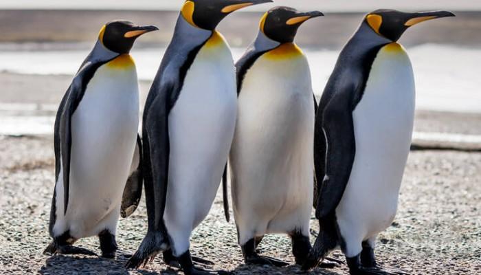 Ερευνούσαν τα περιττώματα των πιγκουίνων και έπαθαν κάτι που δεν θα ξεχάσουν ποτέ