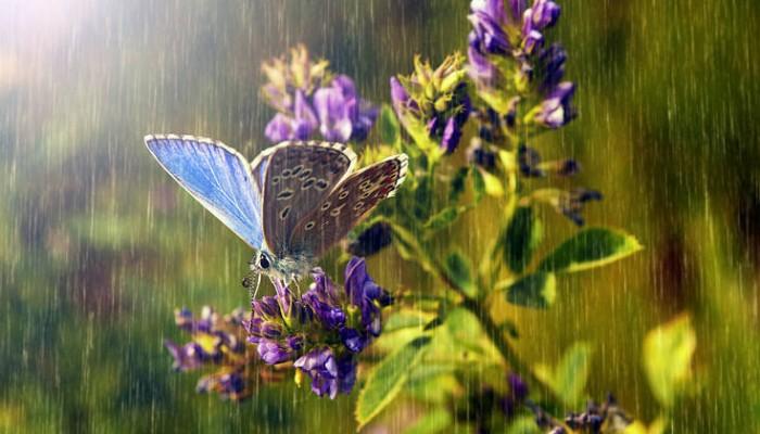 Να πώς προστατεύονται τα έντομα από τη βροχή