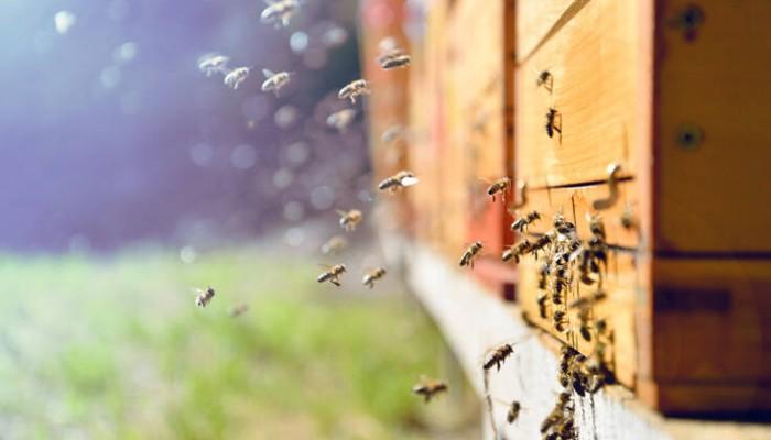 Χαλκιδική: Ανοίγει το πρώτο επισκέψιμο για το κοινό μελισσοκομείο