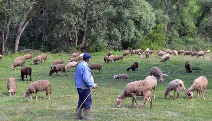 Δεκαοκτώ εστίες καταρροϊκού πυρετού στην ηπειρωτική Ελλάδα