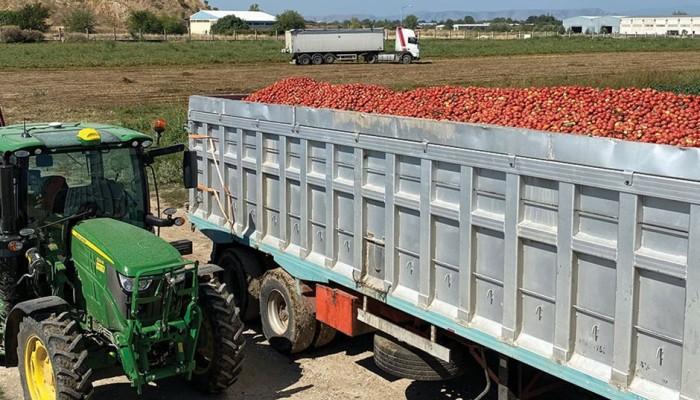 Θεμέλιο για δυναμική επάνοδο η φετινή χρονιά στη βιομηχανική ντομάτα