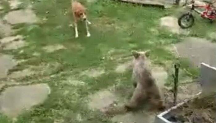 Πώς αντέδρασε ένας σκύλος όταν είδε ένα αρκουδάκι στην αυλή του σπιτιού του