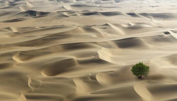 Και όμως οι έρημοι της Αφρικής είναι γεμάτες με δισεκατομμύρια δέντρα
