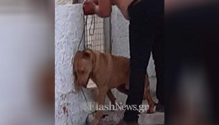 Τα κατάφερε ο σκύλος που έζησε φρικτό βασανισμό στα Χανιά (φωτο - βίντεο)