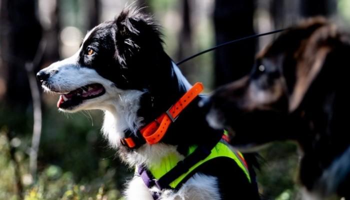 Το αρχαίο DNA ρίχνει περισσότερο φως στην προϊστορία των σκύλων
