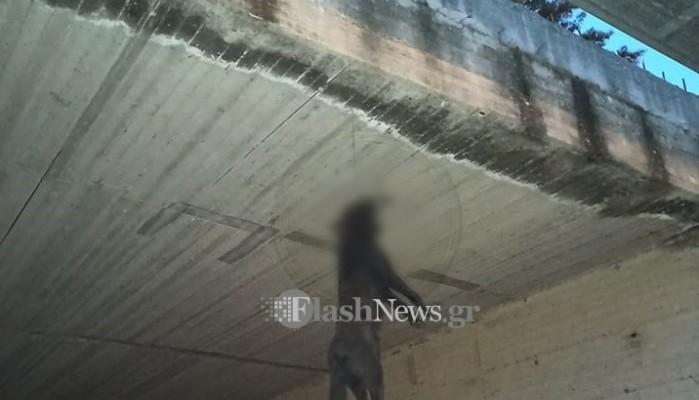 Φρίκη: Κρέμασαν σκύλο από γέφυρα στα Χανιά (φωτο)