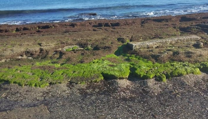 Σπάνιο φυσικό φαινόμενο σε παραλία του Ηρακλείου: Η θάλασσα τραβήχτηκε 8 μέτρα!